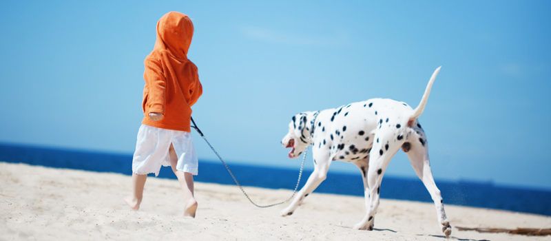 Dog-Leash-Kid-Beach